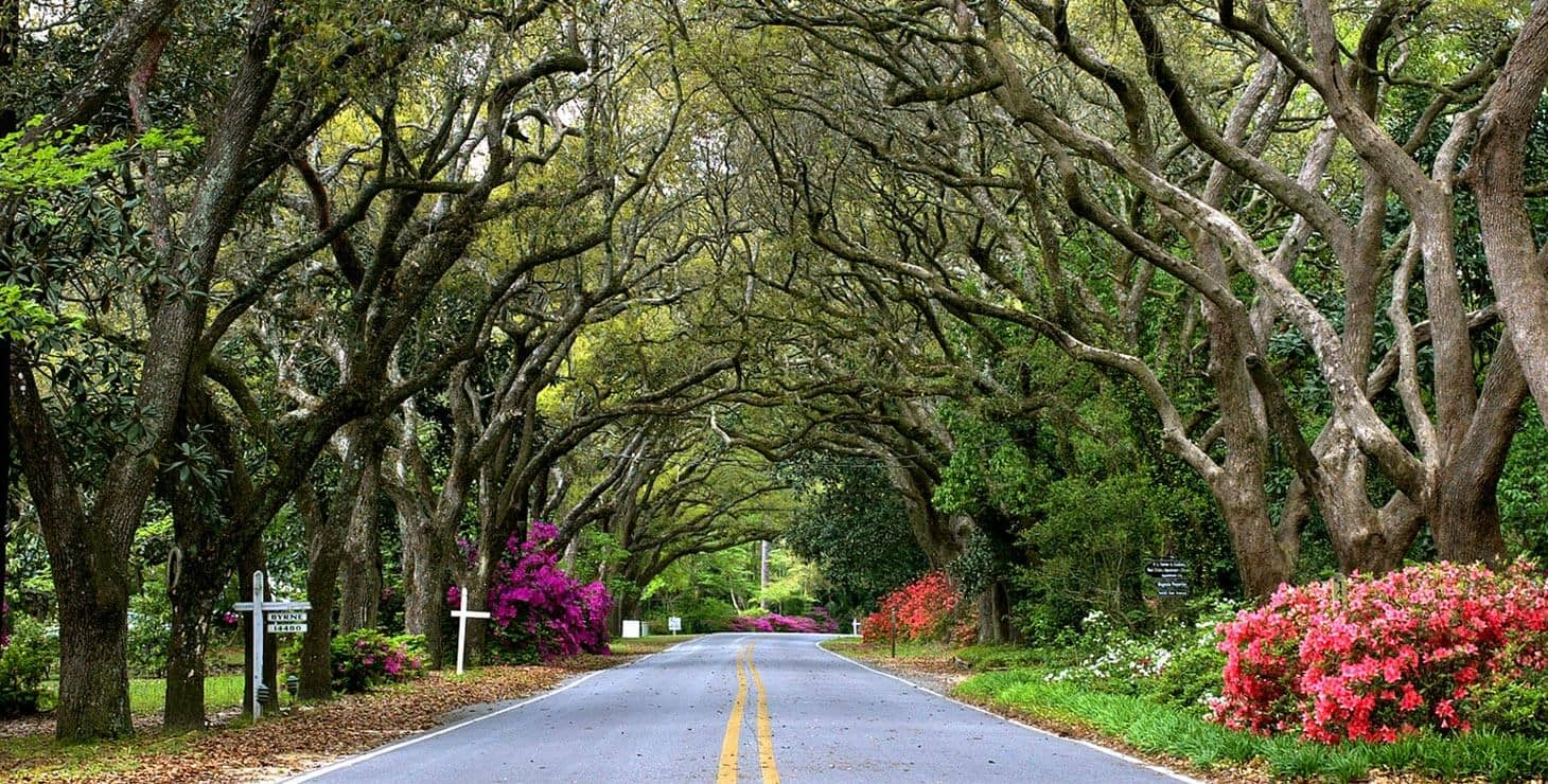 Our tree lined street to our Fairhope, Alabama Bed and Breakfast