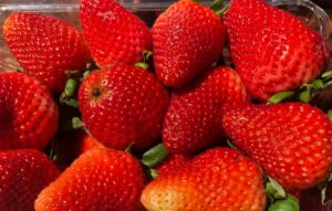 Strawberries at the Baldwin County Strawberry Festival