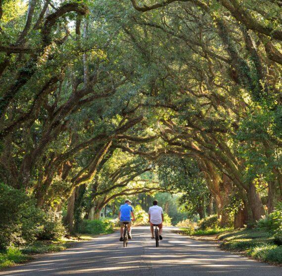 people biking through the trees